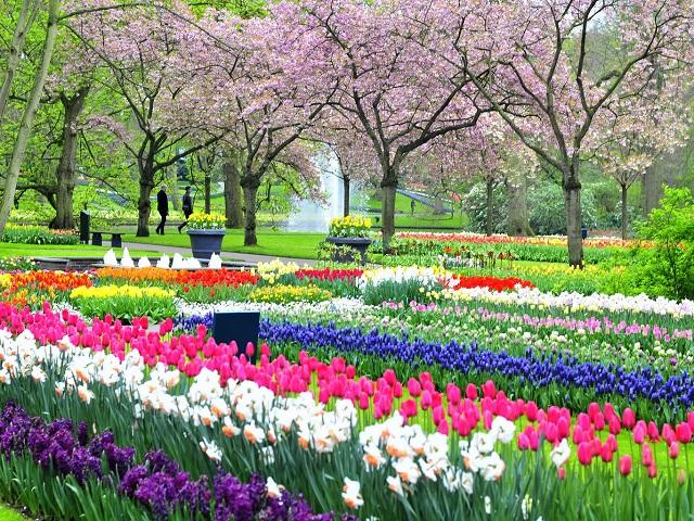 Bay đến xứ sở hoa tulip cùng EVA Air