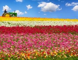 Những thiên đường hoa nổi tiếng của nước Mỹ