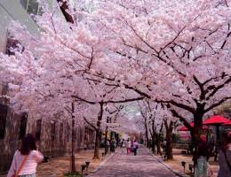Mùa xuân - mùa của lễ hội Tokyo