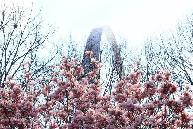 Những trải nghiệm mùa xuân đầy thú vị tại thành phố Seattle