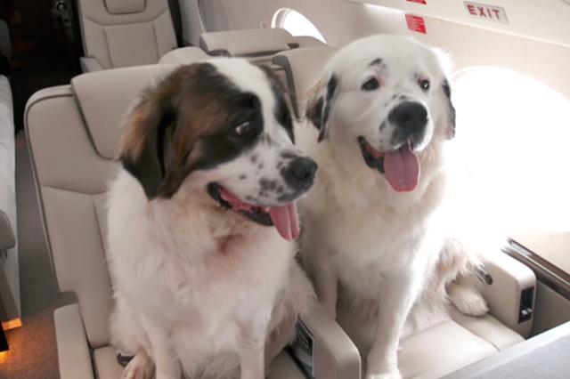 Quy định mang theo động vật cảnh trên chuyến bay EVA Air