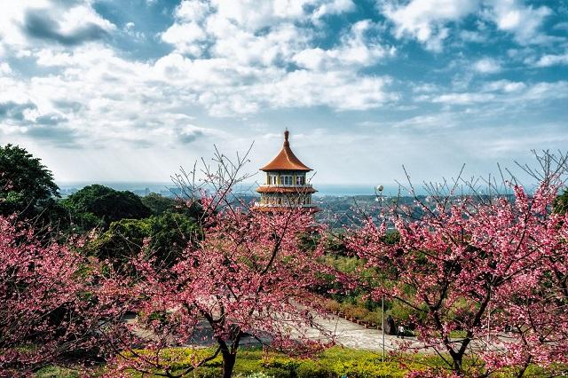 Note ngay list địa điểm ngắm hoa anh đào hot rần rần ở Đài Loan